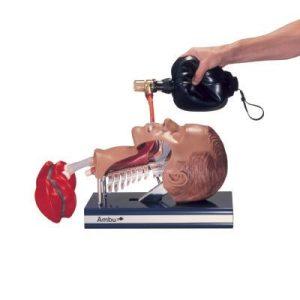 Ambu Intubation trainerC70110